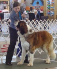 Show Dog Page
